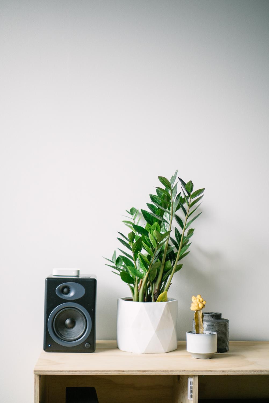 Desk with potte plants and vase